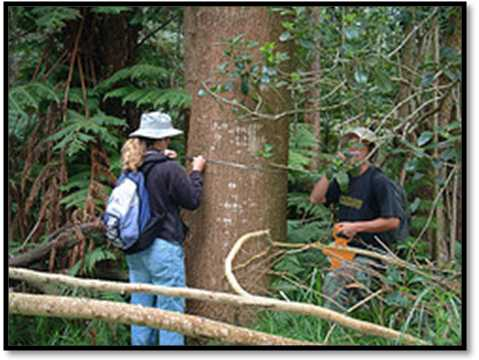 Investing in Koa Forest Plantations | Hawaii Forest