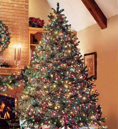 Christmas Tree Demonstration Project | Hawaii Forest ...